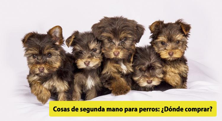 Cosas de segunda mano para perros d nde comprar blog lemonpay - Sofas de segunda mano milanuncios ...